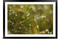 Morning dew of water, Framed Mounted Print