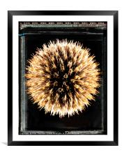 Type 55 Thistle, Framed Mounted Print