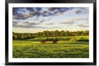 Horses in a field, Framed Mounted Print