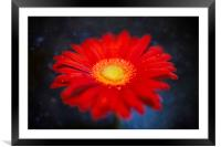 Red on Blue Daisy Experimental Abstract, Framed Mounted Print