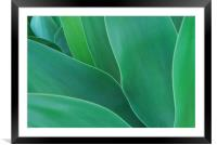 Green Leaves - Agave, Framed Mounted Print
