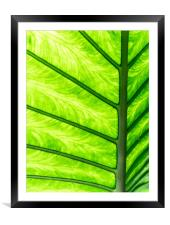 Tropical Glow, Framed Mounted Print