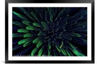 Blue and green dandelion, Framed Mounted Print