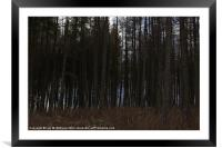 Shaded Trees, Framed Mounted Print