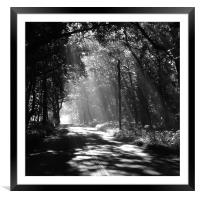 Sunlight through the trees, Framed Mounted Print