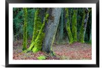Moss Trees , Framed Mounted Print