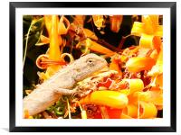 A closer view...., Framed Mounted Print
