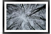 Root or Branch , Framed Mounted Print