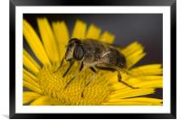 Fascination of The Macro World, Framed Mounted Print