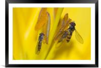 Two of A Kind, Framed Mounted Print