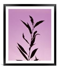 Autumn silhouettes  Leafs, Framed Mounted Print