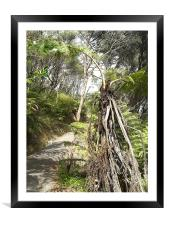 Nature Trail, Framed Mounted Print