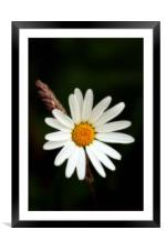 Plain and Simple, Daisy and Grass, Framed Mounted Print