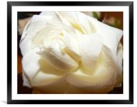 First rose from him..., Framed Mounted Print