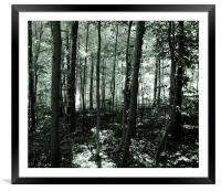 The Forest- Duo Tone, Framed Mounted Print
