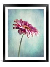 A Shade Of Pink, Framed Mounted Print