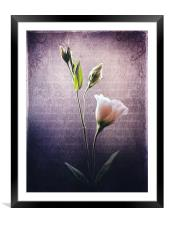 Petals and Poems, Framed Mounted Print