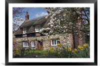 Thatched house with blossom, Framed Mounted Print
