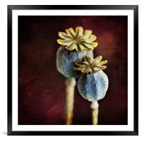 Dried Poppy Heads, Framed Mounted Print