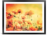 Sunlit Poppies, Framed Mounted Print
