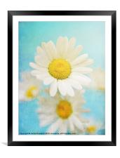 Oxeye Dasies, Framed Mounted Print