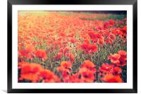 Poppy Love, Framed Mounted Print