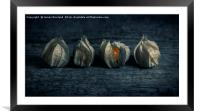 Four Physalis, Framed Mounted Print