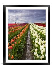 Sea of Color , Framed Mounted Print