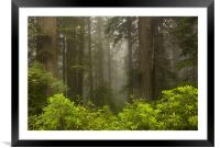 Giants in the Mist, Framed Mounted Print