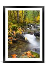 Golden Grove , Framed Mounted Print