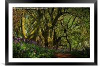 Bunkers Hill Bluebells 3, Framed Mounted Print