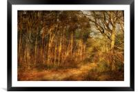 Pond Hills Road 12, Framed Mounted Print