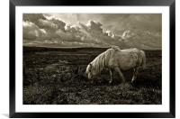 Grazing the Moors, Framed Mounted Print