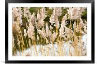 Canal side grass, Framed Mounted Print