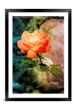 Rose With A View , Framed Mounted Print