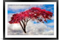 Red Tree in Summer, Framed Mounted Print