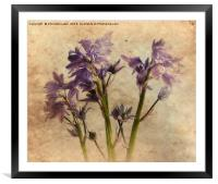 A Spring Memory, Framed Mounted Print