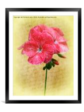 Bloom In Red, Framed Mounted Print