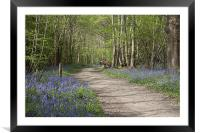 A Walk in the Bluebell Woods, Framed Mounted Print