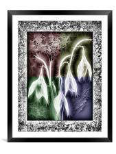 Crystal Snowdrops, Framed Mounted Print