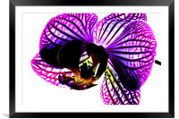 Orchid, Framed Mounted Print