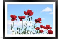 Poppies in the sky, Framed Mounted Print