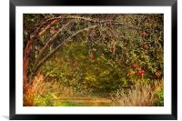 The Apple never falls far from the tree, Framed Mounted Print