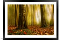 Autumn beech woods with blur, Framed Mounted Print