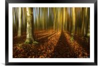 Autumn beech blur, Framed Mounted Print