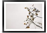 Flowers of summer past, Cockington, Framed Mounted Print