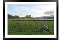 Sheep Grazing in Yorkshire, Framed Mounted Print