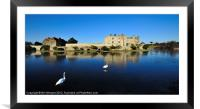 Skating Swans at Leeds Castle, Framed Mounted Print
