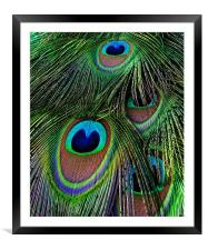 Iridescent Eyes, Framed Mounted Print
