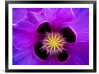 Poppy in Lilac, Framed Mounted Print